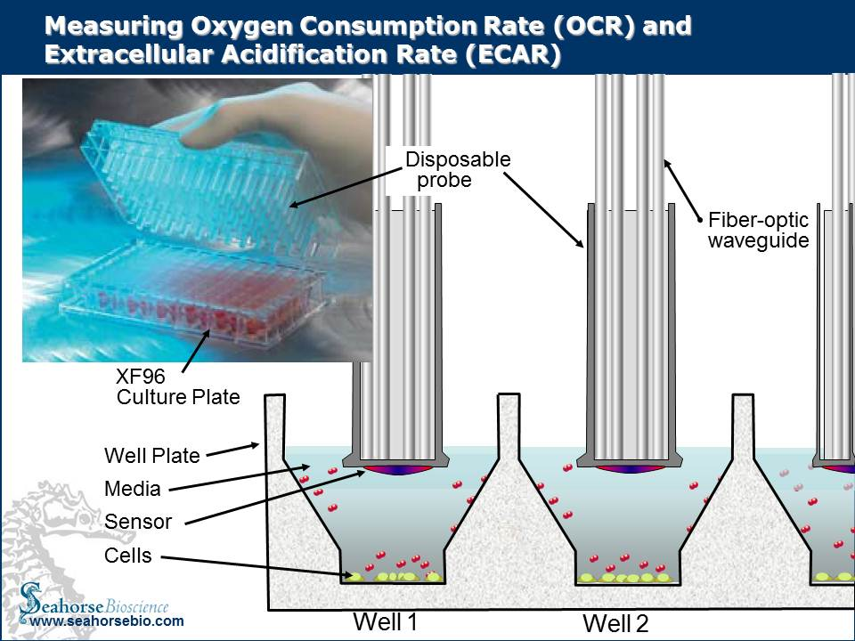 Oxygen Consumption and EC Acidification Rates